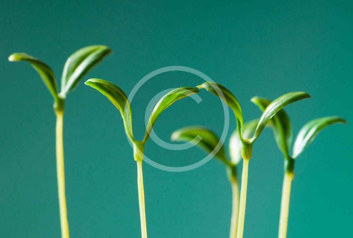 bigstock-Green-seedling-illustrating-co-14319230.jpg
